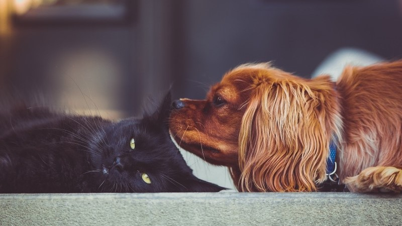 Dog and Black Cat